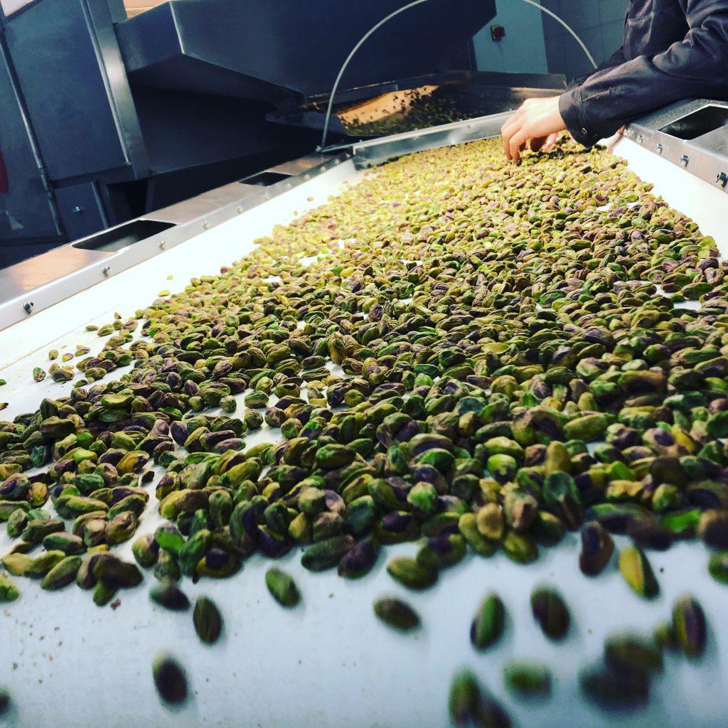 Pistacje tuż po upieczeniu. Na tym etapie przeprowadzana jest kontrola jakości podczas której oddzielane są przypalone pistacje od tych, które będą użyte do masła pistacjowego.