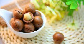 Orzechy makadamia – pochodzenie, właściwości, skład